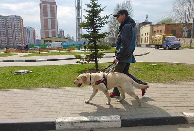 Собака-проводник Ларс