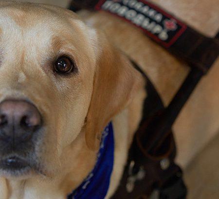 кофейни, в которых рады собакам-поводырям