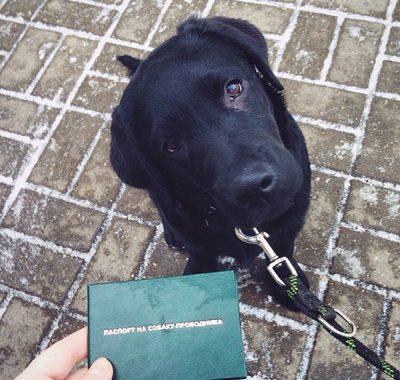 Хельга и паспорт собаки-проводника