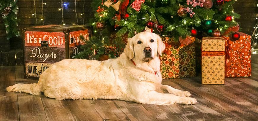 Итоги новогодней акции «Подарки для собак-поводырей»