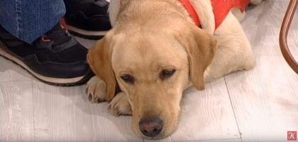 Правила жизни о собаках-поводырях